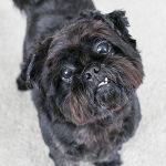 Meet Buster…