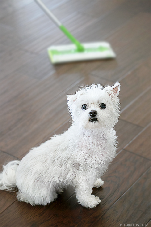 A great adoption story about our rescue dog (Buster), and the fabulous partnership Swiffer and pets have. Read more at livelaughrowe.com