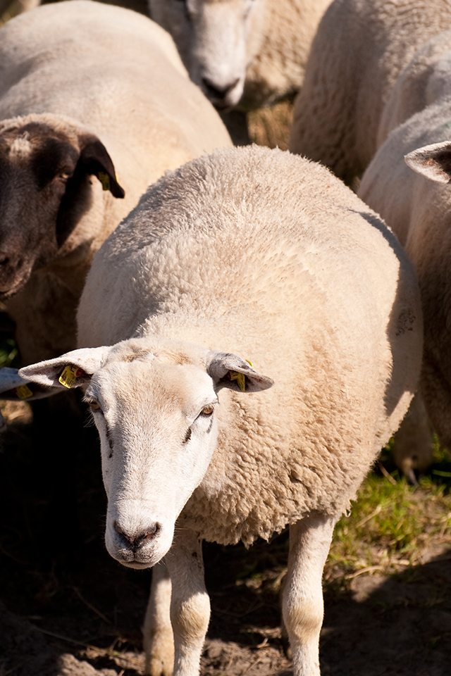 The Shepherd is a great story with the life lesson that there is a time and place to impart one's knowledge and capabilities.