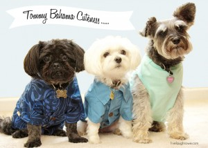 Tropical Fun with Tommy Bahama and PetSmart