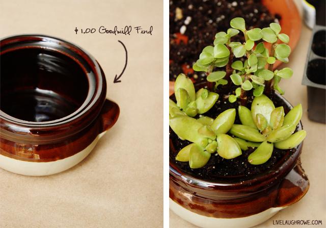 Inexpensive Dish Garden