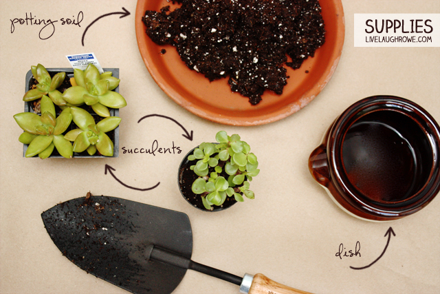 Supplies for DIY Dish Garden