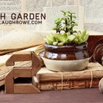 DIY Dish Garden | The Gro Project