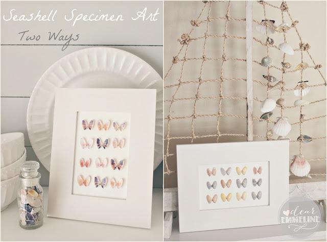 Seashell Specimen Art from Dear Emmeline