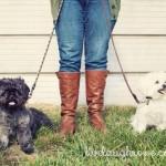 A Healthy Dog is a Happy Dog | ALPO®