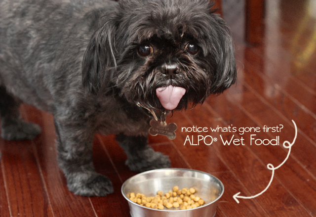 Buster enjoy the Alpo Wet Food