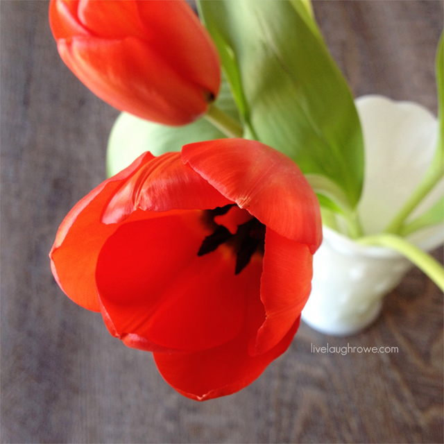 A Spring Favorite -- Tulips