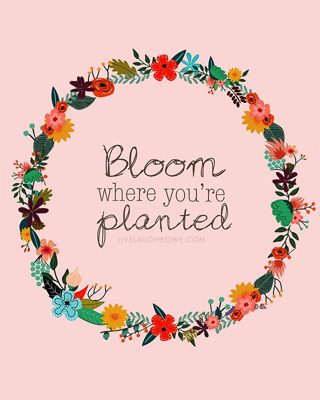 Image result for blossom where you're planted