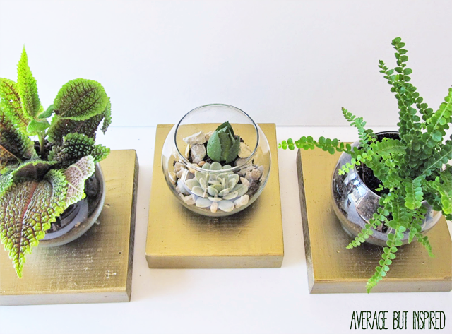 Three Knockoff Terrariums from Average But Inspired
