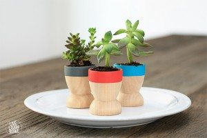 Adorable Mini Succulent Planters that make lovely favors or small gifts! Find out more at www.livelaughrowe.com