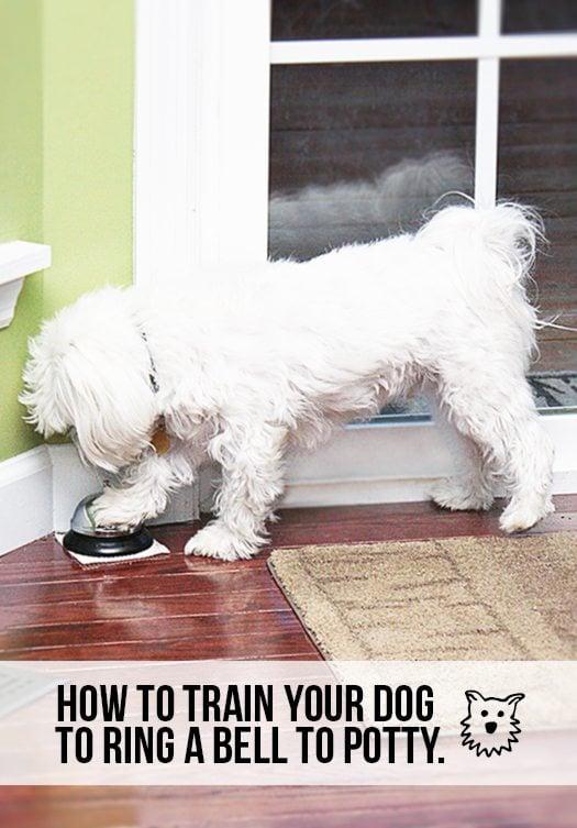 Dog Training Maryville Tn