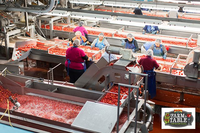 Red Gold Farm to Table Event in Indianapolis, IN. An educational experience of a lifetime.