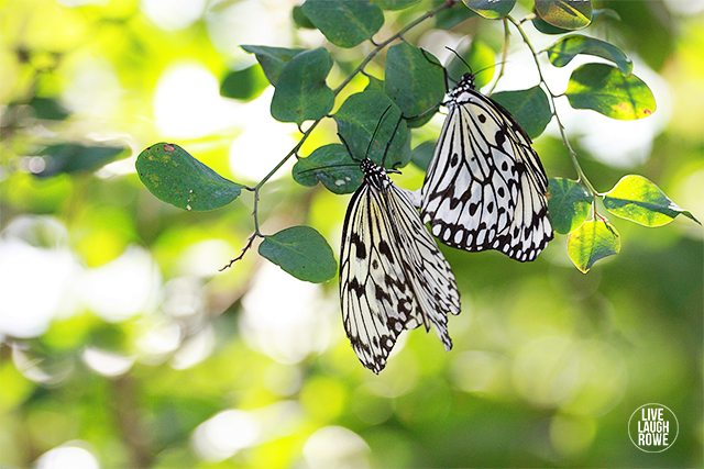The Butterfly House indoor conservatory has a carefully controlled environment housing nearly 2,000 tropical butterflies in free flight.
