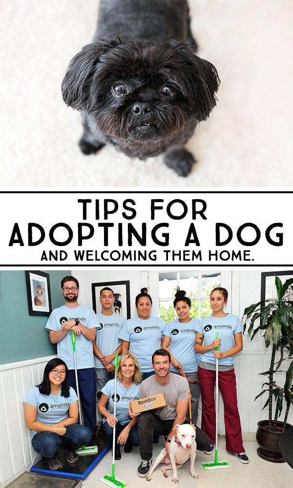 5 Tips for Adopting a Dog. Great tips to keep in mind! livelaughrowe.com