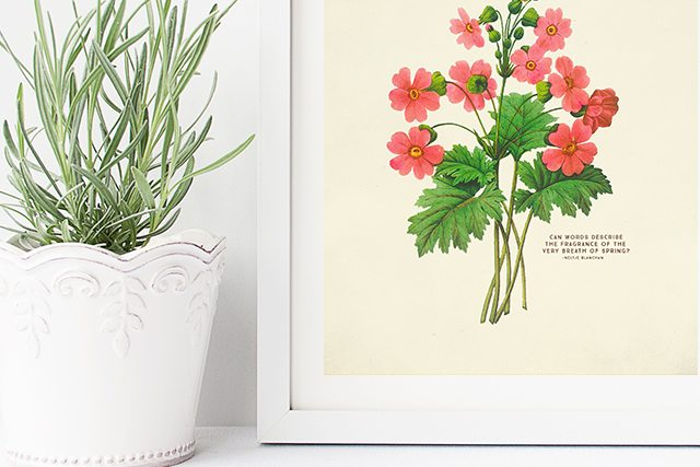 Vintage Botanical Prints are beautiful. Who doesn't love free printable wall art too? These prints would make a great addition to your spring decor by placing them on a table or hanging them on your wall. livealughrowe.com