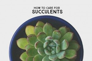 Looking to start a succulent garden? Here are some great tips on How to Care for Succulents. livelaughrowe.com