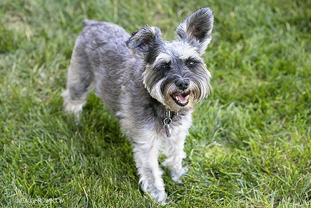 Unleash the joy at your local dog parks! Sharing the benefits for both dogs and owner. livelaughrowe.com