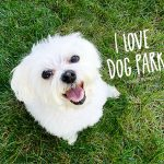 Dog Parks | Unleash the Joy