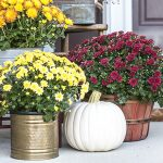 Staying Cozy with Fall Scents