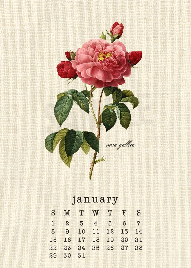 Beautiful botanical January 2017 Calendar. livelaughrowe.com