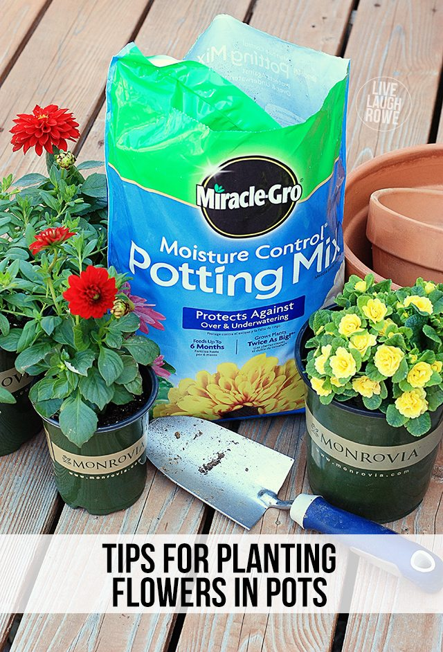 Tips for planting flowers in pots! I spent some time this weekend planting some beautiful Monrovia flowers. www.livelaughrowe.com