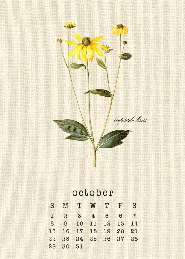 Beautiful Botanical October 2017 Calendar. Free printable calendar at livelaughrowe.com