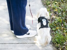 24 million dogs suffer from regular anxiety! Canine Anxiety is very real -- understanding the causes is helpful. Five resources for relief are discussed, along with Calmz Anxiety Relief System. Learn more at livelaughrowe.com