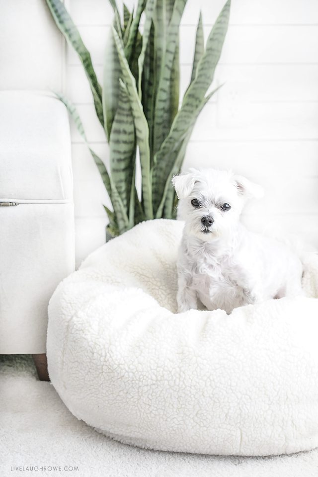 A space created especially with her dogs in mind? Love it! Kelly of Live Laugh Rowe made this space pet friendly and fabulous. livelaughrowe.com