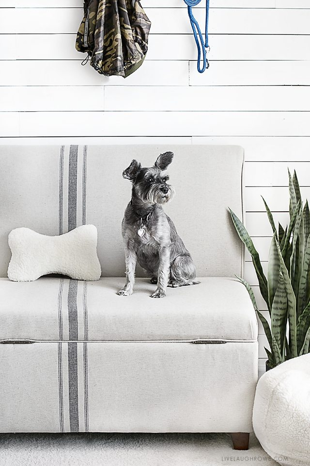 A Space Created Especially With Her Dogs In Mind? Love It! Kelly Of Live