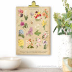 Botanical Spring Flowers | Vintage Inspired 8×10 Printable