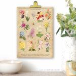Botanical Spring Flowers | Vintage Inspired 8×10 Printable