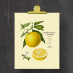 Old Fashioned Lemonade Printable