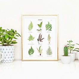 Looking for some beautiful fern wall art to add to your home decor? This complimentary Fern Botanical Print has a subtle beauty to it and can compliment any style. Print yours at livelaughrowe.com