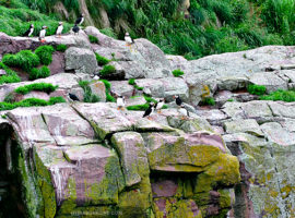 Amazing Puffin and Whale watching tour in Bulls Bay, Newfoundland and Labrador. Learn more at livelaughrowe.com