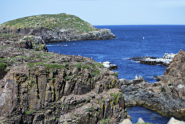 Puffin Viewing Site in Elliston, Newfoundland and Labrador. A short walk