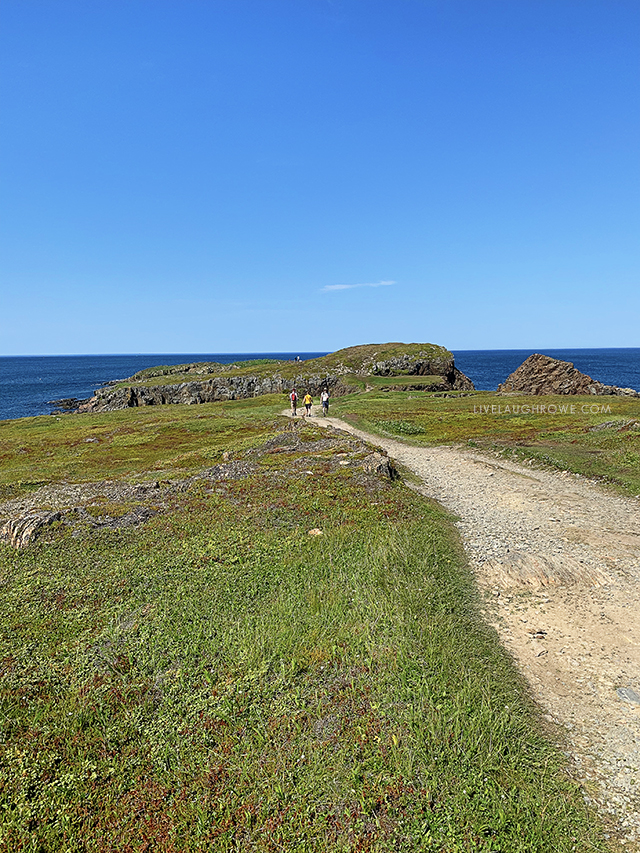 Puffin Viewing Site in Elliston, Newfoundland and Labrador. A moderate walk along a worn path to the rocky cliffs and voila… you'll see endless numbers of puffins. livelaughrowe.com