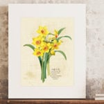 Daffodils Printable with Winter's Tale Quote
