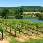 Missouri Wineries | 5 Must-See Wineries