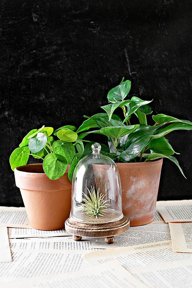 Plant and Cloche Vignette